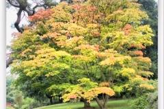HDR_Garden3_Tree1
