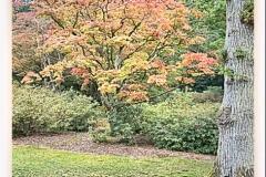 HDR_Garden3_Tree2