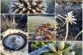 392 - Winter Garden