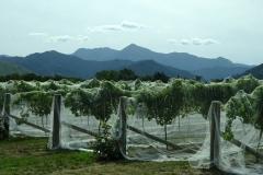 646 - Netting the Vines