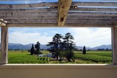 644 - Wither Hills Vineyard NZ