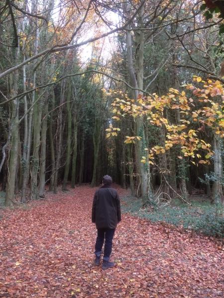 423 Autumn at Adsdean