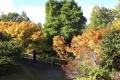 438 Wakehurst in Autumn