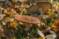430 Autumn of the toadstools
