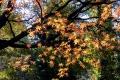 444 Autumn Leaves