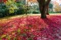 442 Autumn Sunshine