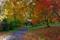 440 Autumn Walk in Petworth Park