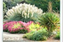 HDR_Garden3_Pampas