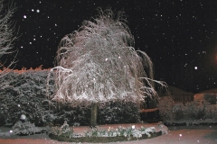 381 - Winter Willow