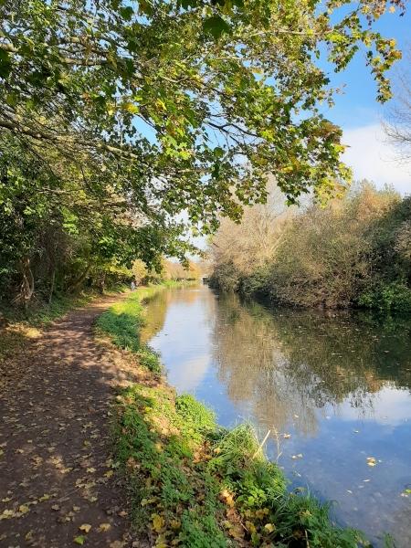436 An Autumn Walk along Chichester Canal