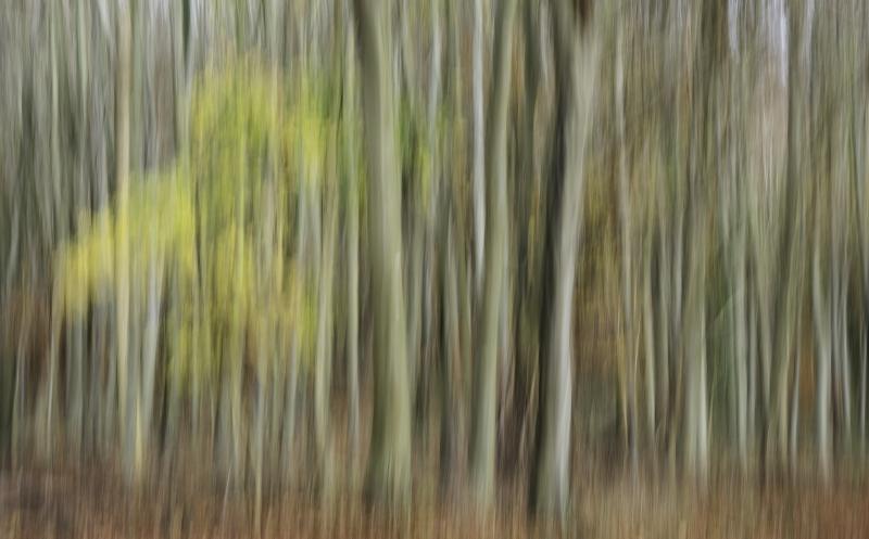 456 Autumn Woods