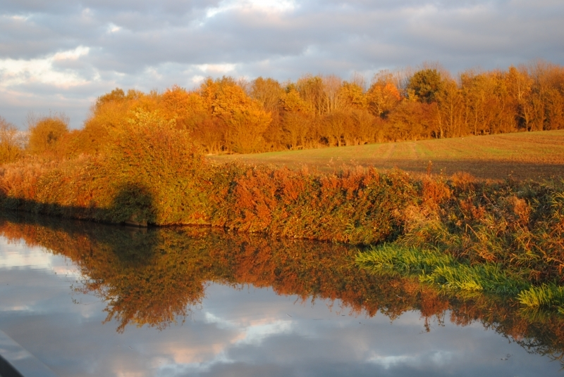 454 Autumn Gold on the Grand Union Canal