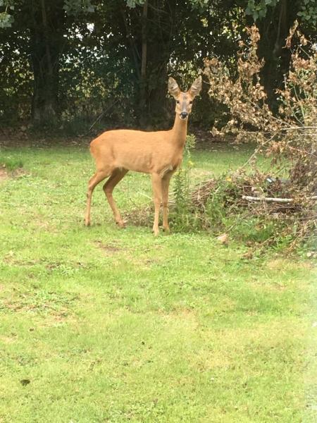 425 Autumn Garden Visitor