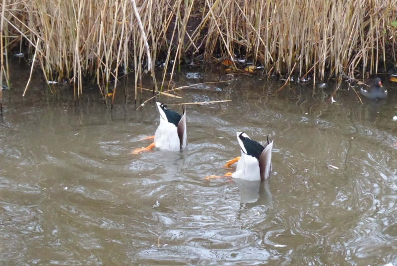 452 Synchronised Swimming
